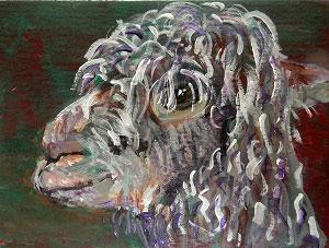 Curly Alpaca