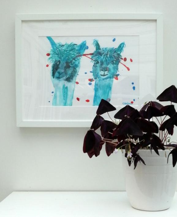 Turquoise alpacas, alpaca painting, white framed alpacas, black framed alpacas, llama gift,